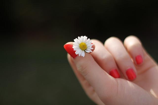 sedmikráska v ruce