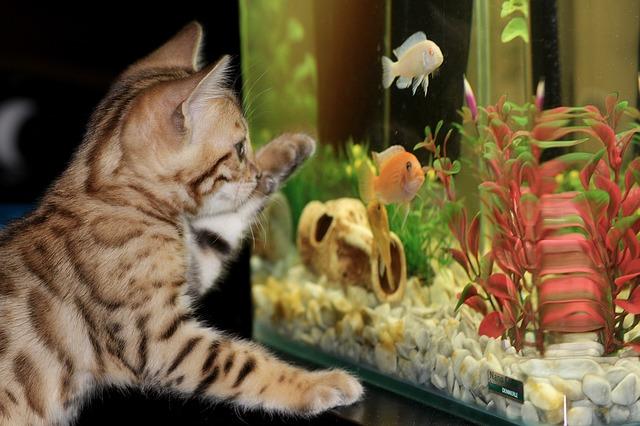 kotě u akvária