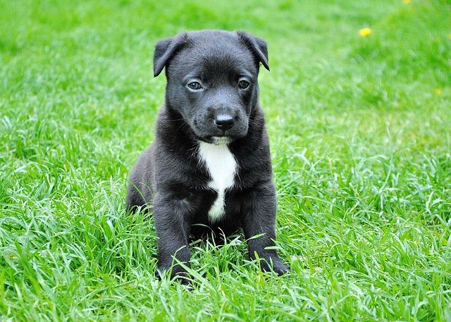 roztomilé štěně v trávě