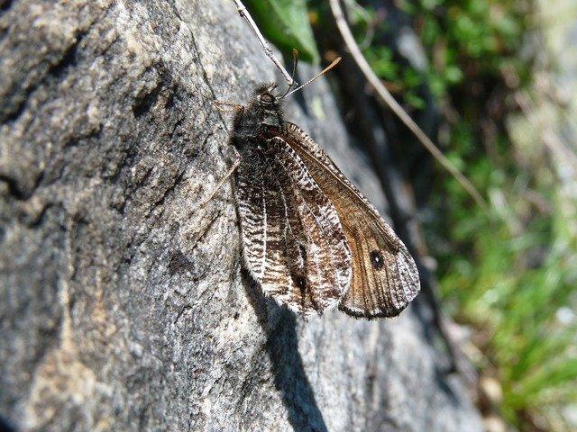 maskovaný motýl